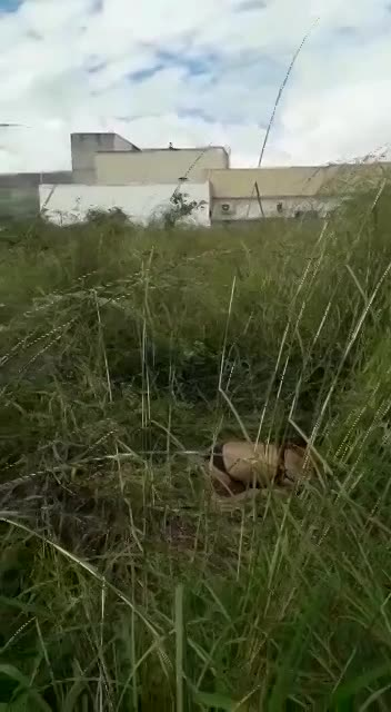 BRAZIL WOMAN RAPED THEN SUFFOCATED TO DEATH - LiveGore.com