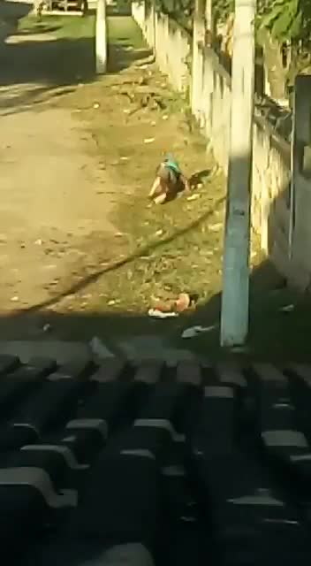 WOMAN BRUTALLY PUNCHED AND RAPED IN BROAD DAYLIGHT - LiveGore.com